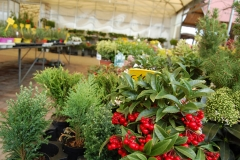 garden-aldrovandi-vivai-garden-03