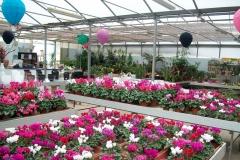 garden-aldrovandi-vivai-garden-13